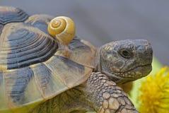 蜗牛和turtoise 免版税库存图片