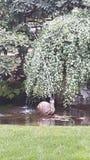 蜗牛喷泉 免版税图库摄影