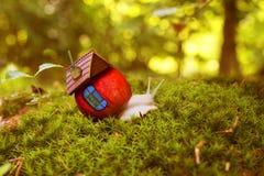 蜗牛在与房子的森林青苔中爬行 免版税库存图片