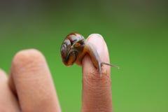 蜗牛在儿童手,大自然爱好者上 免版税库存图片