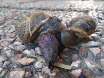 蜗牛在冬天 库存图片