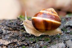 蜗牛在夏天庭院1里 库存照片