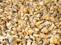 蜗牛在市场上 图库摄影