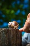 蜗牛在庭院里在乡下 库存图片