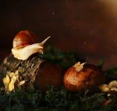 蜗牛在树的森林里 库存图片