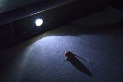 蜗牛在树荫下 免版税库存照片