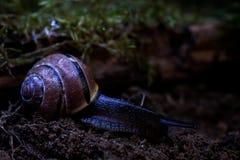蜗牛在森林里 免版税库存图片