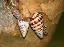 蜗牛在波多黎各 免版税图库摄影