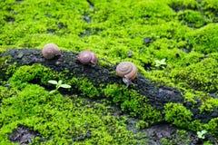 蜗牛在热带雨林里 库存照片