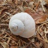 蜗牛在秋天 免版税库存图片