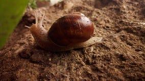 蜗牛在雨中 免版税图库摄影