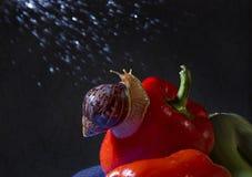 蜗牛在雨中 图库摄影