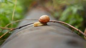 蜗牛在雨以后的围场在与大露滴的绿草 股票录像