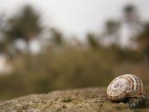 蜗牛墙纸迷离背景 免版税库存照片