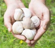 蜗牛壳在手上 免版税库存图片