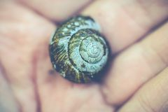 蜗牛壳在手中 图库摄影