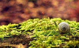 蜗牛壳在森林里 免版税库存图片