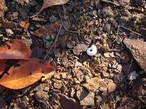 蜗牛壳在秋天黄色草背景中 免版税库存图片