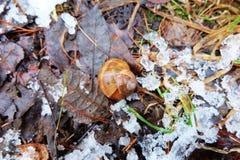 蜗牛壳我雪 免版税库存图片