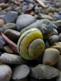 蜗牛壳, 图库摄影