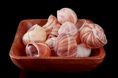 蜗牛壳 免版税库存图片