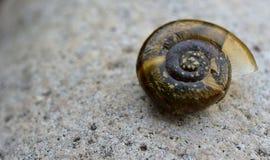蜗牛壳 免版税库存照片