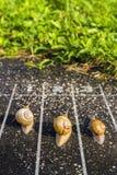 蜗牛奔跑,在终点线附近,一两三在地面ne 免版税图库摄影