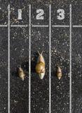 蜗牛奔跑,在终点线附近,一两三在地面ne 图库摄影
