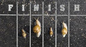 蜗牛奔跑,在终点线附近,在地面上的优胜者标志 库存图片