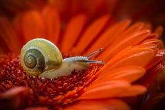 蜗牛宏指令摄影 免版税库存照片