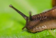 蜗牛宏观射击  库存照片