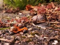 蜗牛家庭的彩色照片  免版税图库摄影