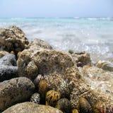 蜗牛房子岩石 免版税库存图片