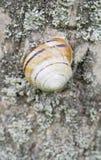 蜗牛房子 免版税库存照片
