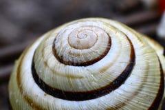 蜗牛房子 图库摄影