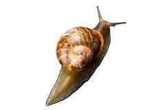 蜗牛接近  免版税库存照片