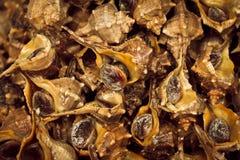 蜗牛新鲜在是的海外面被消耗的新鲜的 与颜色的许多线状的钙壳 免版税库存照片