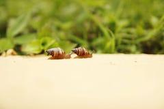 蜗牛旅行 库存照片