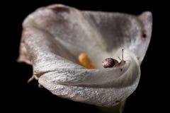 蜗牛旅行 图库摄影