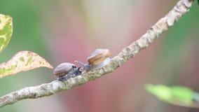 蜗牛是在植物的无脊椎动物野生生物 股票视频