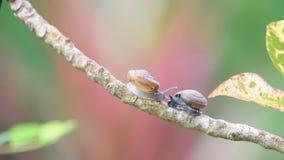 蜗牛是在植物的无脊椎动物野生生物 影视素材