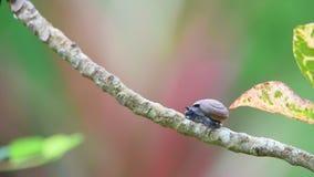 蜗牛是在植物的无脊椎动物野生生物 股票录像