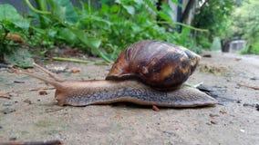 蜗牛有好的背景 库存图片