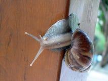 蜗牛木头 库存照片