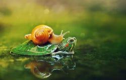 蜗牛末端乌龟 免版税库存图片