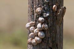 蜗牛某个树桩 库存照片