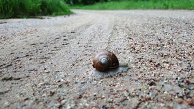 蜗牛横渡roud 免版税库存照片