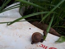 蜗牛母亲 免版税库存照片
