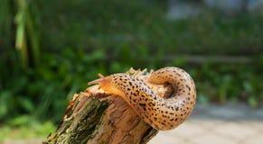 蜗牛每个分支移动 库存照片