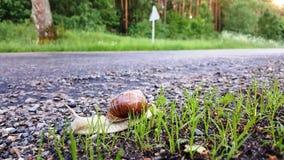蜗牛沿roud的边路爬行 免版税库存图片